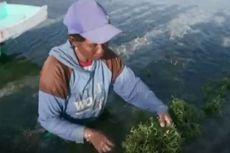 Terkena Dampak Badai Seroja, Petani Rumput Laut Merugi Rp 7 Miliar