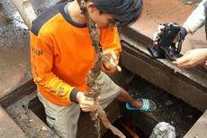 Cari Kulit Kabel, Pasukan Oranye Masuk ke Gorong-gorong