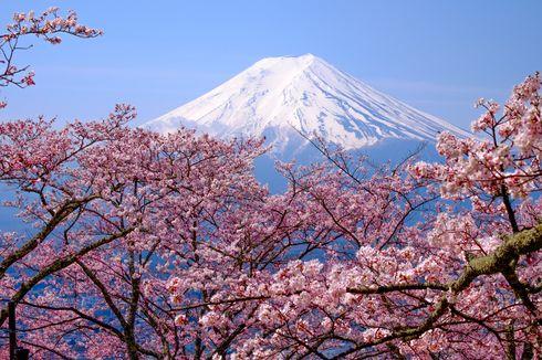 Gara-gara Virus Corona, Festival Bunga Sakura di Jepang Dibatalkan