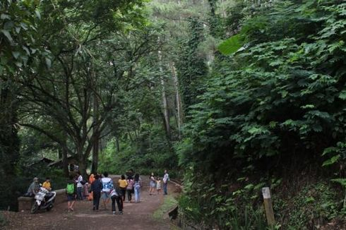 Asrinya Hutan Pinus di Tengah Kota Bandung