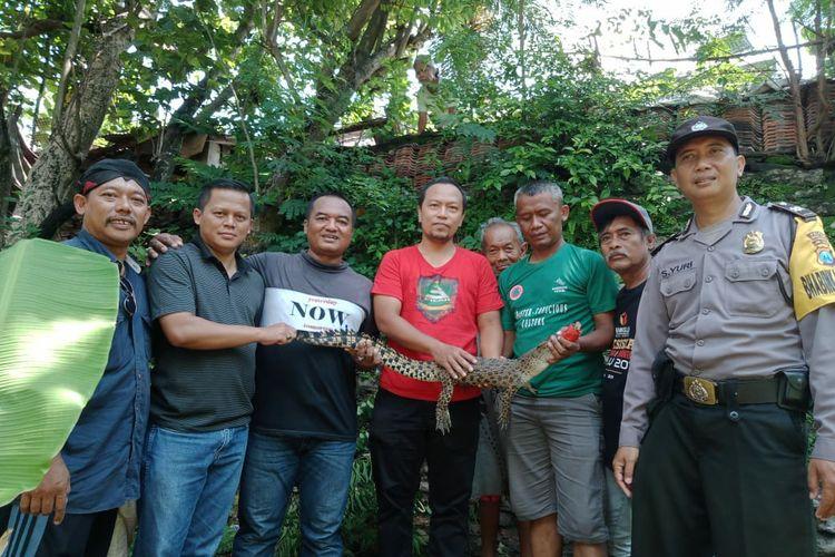 Buaya muara yang berhasil dievakuasi dari Sungai Brantas wilayah Ringinanom, Kota Kediri, Jawa Timur, Sabtu (15/2/2020)