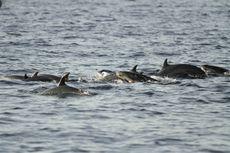 Dari Alogaritma Facebook, Ilmuwan Kembangkan Alat Pelacak Lumba-lumba