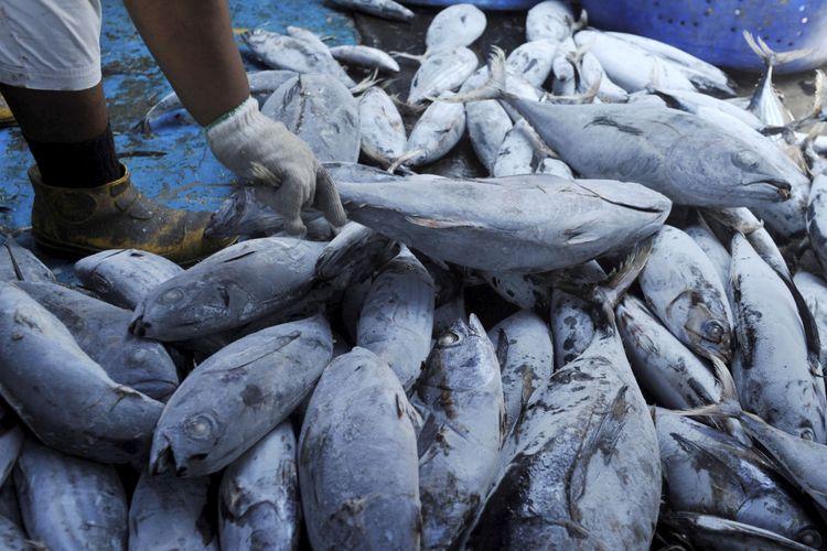 Ikan tangkapan nelayan dibongkar dari kapal di Pelabuhan Perikanan Samudra Nizam Zachman, Jakarta, Selasa (27/8/2013). Direktorat Jenderal Pengolahan dan Pemasaran Hasil Perikanan Kementerian Kelautan dan Perikanan gencar melakukan upaya mendorong ekspor ikan hasil penangkapan.