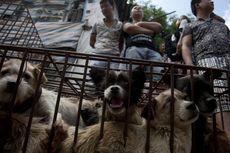 China Golongkan Anjing sebagai Peliharaan, Bukan Makanan