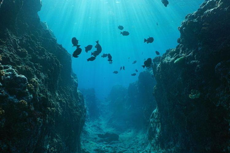 Ilustrasi kehidupan laut dalam