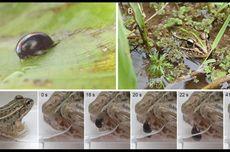 Lolos dari Maut, Kumbang Ini Bertahan Hidup meski Telah Dimakan Katak