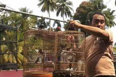 Kenapa Harga Burung Kicau di Indonesia Bisa Sampai Ratusan Juta?