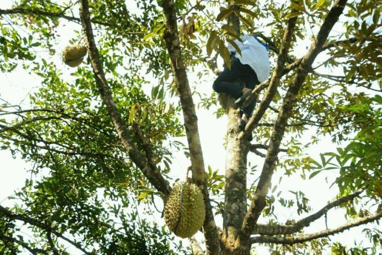 Foto Bupati Lebak Iti Octavia Jayabaya ramai diperbincangkan di media sosial. Foto itu menunjukkan Iti sedang memanjat pohon durian.