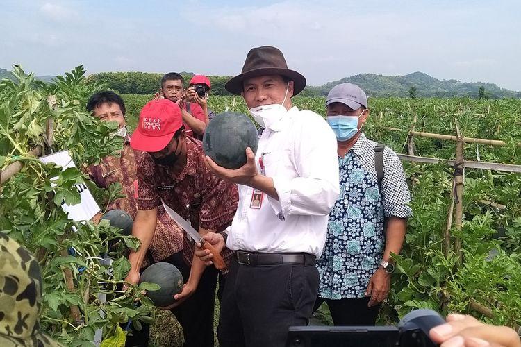 PANEN-Bupati Wonogiri, Joko Sutopo memanen perdana semangka premium jenis baby black sweet di Desa Pule, Kecamatan Selogiri, Kabupaten Wonogiri, Selasa (2/3/2021).