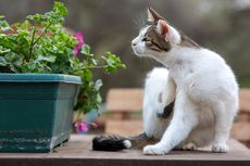 Cari Tahu, Apakah Kamu Cocok Pelihara Kucing?