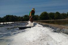 Susi: Harga Garam Petani Anjlok Karena Impor Berlebih dan Bocor