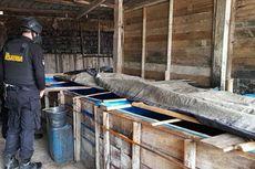 Gerebek 2 Pabrik Miras di Banyumas, Polisi Amankan 365 Liter Tuak