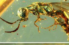 Terjebak di Fosil Damar 99 Juta Tahun, Warna Serangga Purba Ini Masih Awet
