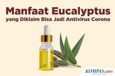 INFOGRAFIK: Manfaat Eucalyptus yang Diklaim Bisa Jadi Antivirus Corona