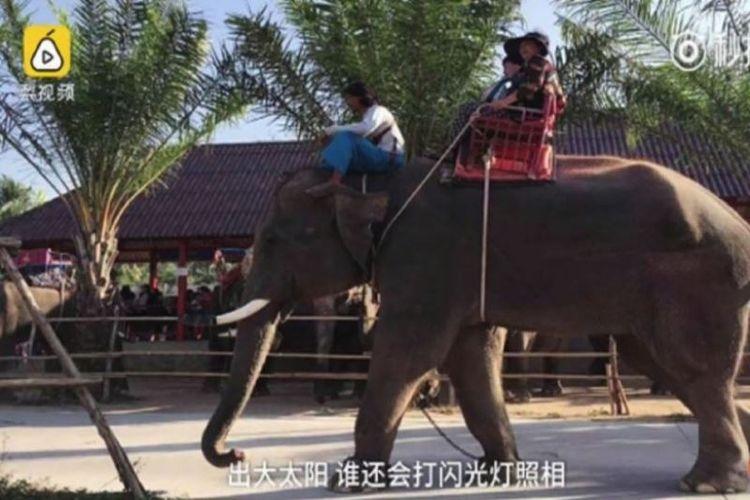 Pemandu wisata China berusia 35 tahun terbunuh oleh seekor gajah yang menyerang sekelompok turis di Thailand. (Straits Times)
