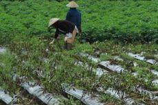 Guru Besar Unpad: Masa Depan Pertanian Indonesia Ada di Perkotaan