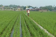 Wilmar Gandeng Petani di Jawa Timur Lakukan Penanaman Padi di Lahan Seluas 148