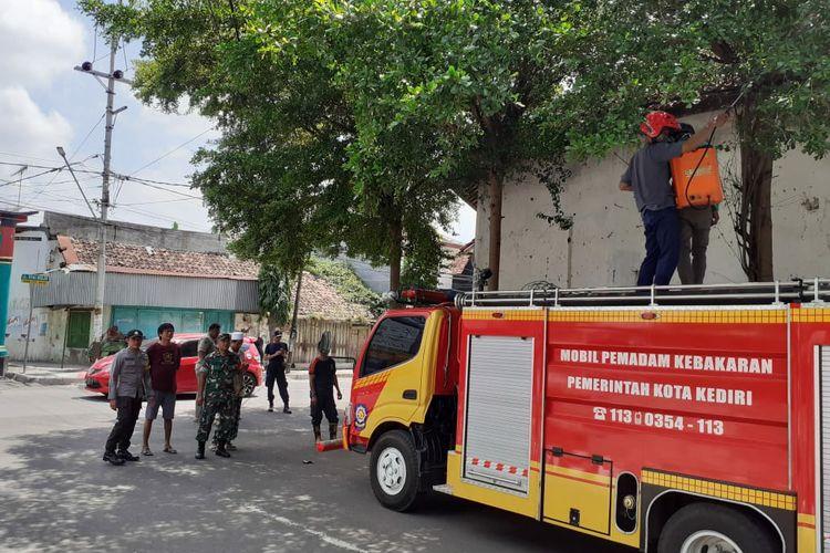 Pembersihan ulat bulu di Jl.Trunojoyo Kota Kediri, Jawa Timur.