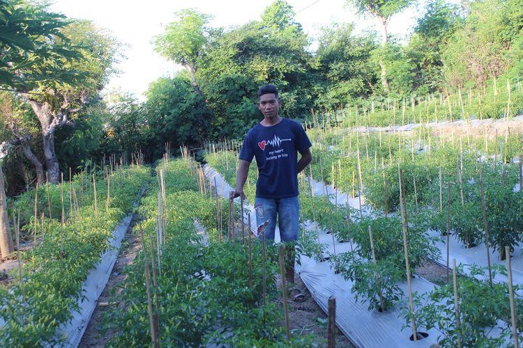 Andreas Tarapanjang (27) sedang berada di lahan cabai rawit miliknya, Jumat (23/7/2021) sore.