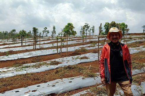 Kini Bertani Singkong, Eks Wakil Bupati Bandung Barat: Usia 60 Tahun ke Atas, Saya Ingin Sukses di Pertanian