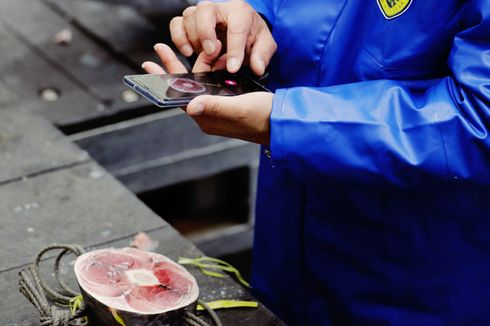 Pilih Ikan Tuna Kualitas Bagus Sekarang Bisa Pakai Aplikasi Smartphone