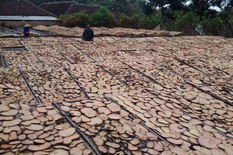 Ribuan irisan porang dijemur di halaman rumahn Hartoyo, Rabu ( 3 / 5 / 2017) sore.