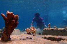 Mengapa Laut Indonesia Menjadi Tempat Spesial sebagai Habitat Terumbu Karang? Jawaban Soal 7 Agustus SMP