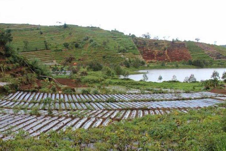 Ilustrasi pertanian