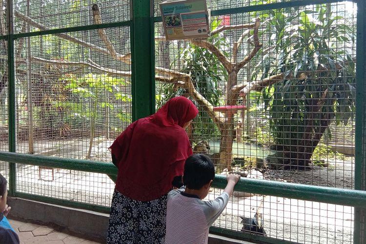 Seorang ibu dan anak sedang berinteraksi dengan burung Julang Sulawesi di Kebun Binatang Ragunan, Jakarta, Jumat (27/12/2019).