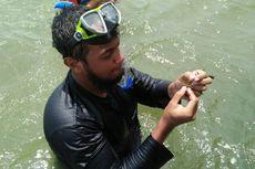 Sulitnya Melacak Ikan Duyung dan Lamun di Perairan Kotawaringin Barat