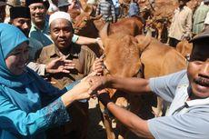 Ke Bangkalan, Khofifah Dicurhati Pedagang Sapi