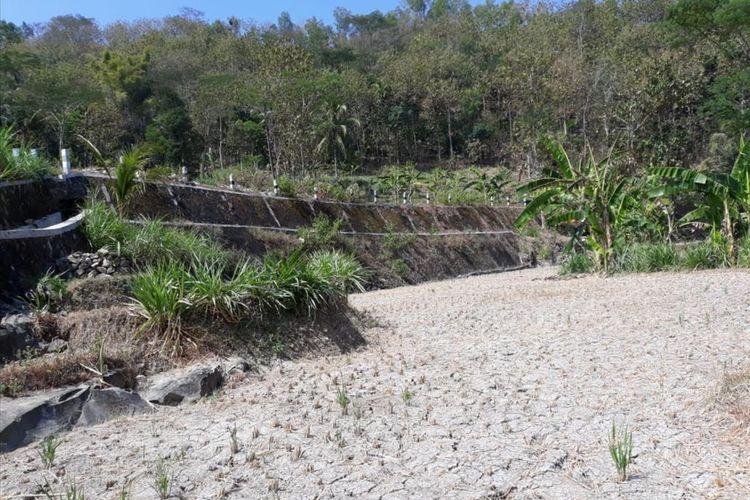 Lahan Pertanian Mengering di Kecamatan Gedangsari, Gunungkidul