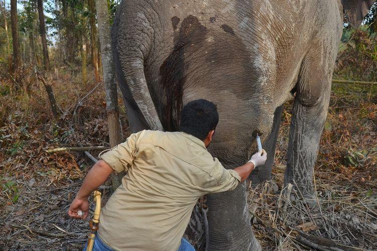 Tim rescue Balai Besar Konservasi Sumber Daya Alam (BBKSDA) Riau mengobati seekor gajah sumatera yang sedang sakit di areal perusahaan PT Arara Abadi, di Desa Tasik Serai Timur, Kabupaten Bengkalis, Riau