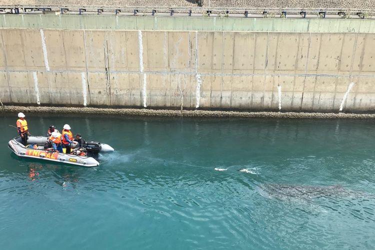 Proses evakuasi hiu paus dari kanal PLTU Paiton menggunakan perahu karet.