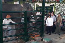 Cucu Risma Beri Nama Dumbo kepada Bayi Gajah Sumatera yang Lahir di KBS