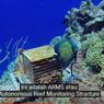 Jika Terumbu Karang di Laut Habis, Apa yang Akan Terjadi? Jawaban Soal TVRI 7 Agustus SMP