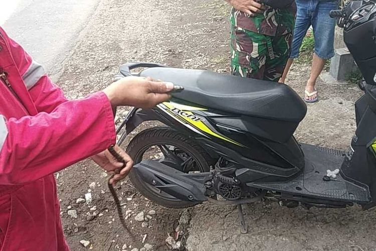 Petugas UPT Pemadam Kebakaran Kota Malang saat mengevakuasi ular dari dalam motor pada Rabu (23/6/2021).