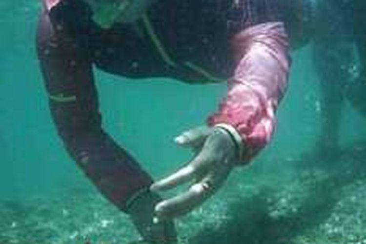 Wakil Wali Kota Bengkulu, Patriana Sosialinda saat menyelam di laut Pulau Tikus dan bermain bersama ikan Nemo.