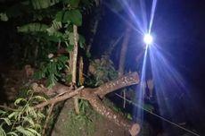 Tertimpa Pohon Besar Saat Bersepeda, Ibu Empat Anak Tewas