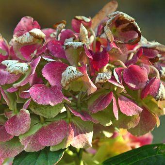 Descripción de una planta marchita.
