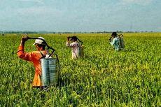 Pestisida Palsu Marak di Indonesia, Rugikan Petani dan Produsen