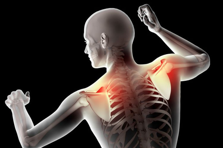 Ilustrasi tulang belikat