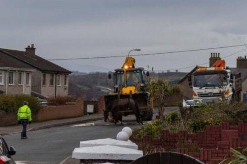 Seekor Kuda Ditinggalkan untuk Mati di Tengah Jalan di Irlandia