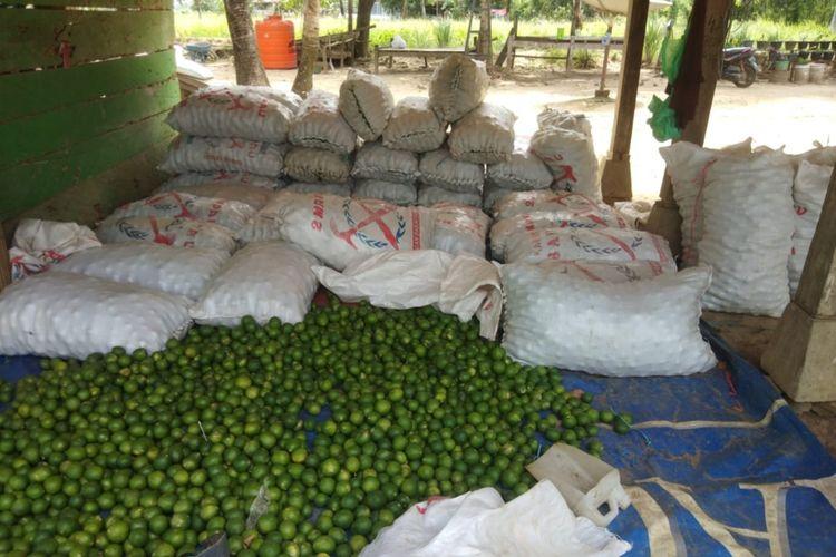 Sebanyak 2,7 ton jeruk nipis senilai Rp 31,2 juta akan diekspor ke Malaysia. Berdasarkan data IQFAST di Karantina Pertanian Belawan tercatat, tahun 2019, ekspor mencapai 115 ton dengan nilai Rp 1,3 miliar. Pandemi di tahun 2020 memukul ekspor jeruk nipis hingga hanya sebanyak 20,9 ton atau setara dengan Rp 288,2 juta saja sepanjang tahun.