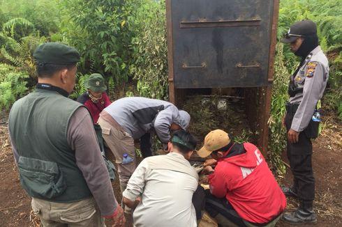 BKSDA Riau Pasang 12 Perangkap untuk Tangkap Harimau Bonita