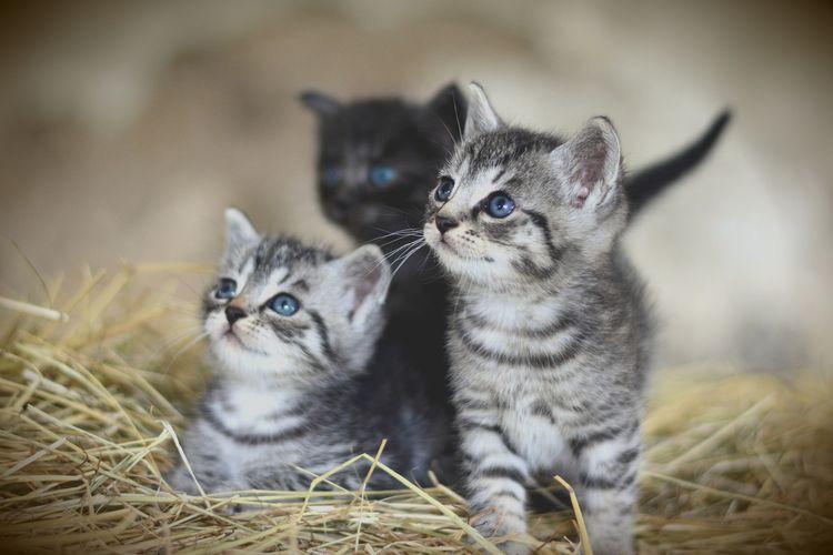 Simak 10 Cara Merawat Anak Kucing Halaman All Kompas Com