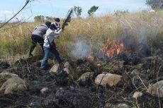 100 Hektar Hutan Lindung Ilinmedo Terbakar