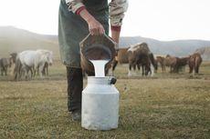 Melestarikan Tradisi Lewat Bisnis Susu Kuda Liar Khas Bima