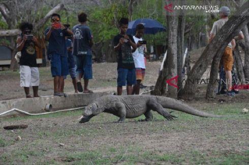 Duduk Perkara Rencana Kontroversi Gubernur NTT Tutup Pulau Komodo