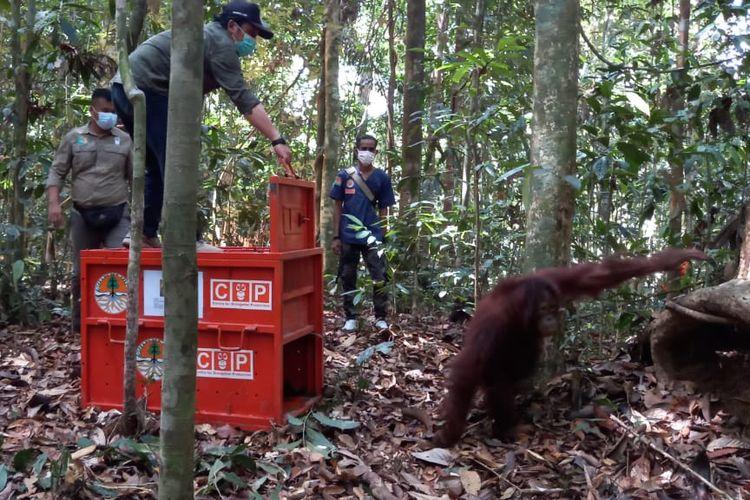 Plt Kepala BKSDA Kaltim, Nur Patria Kurniawan saat melepas Orangutan Gisel dalam kandang transport memasuki Hutan Lindung Sungai Lesan (HLSL), Kabupaten Berau, Kalimantan Timur (Kaltim), Sabtu (19/6/2021).